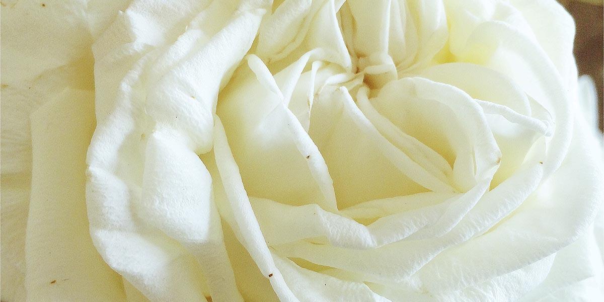 bloemen hoofdfoto